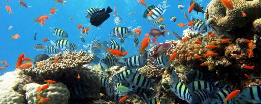 Monuments Sight Seeing Attractions Red Sea Fishing Tour